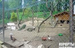 Санаторій Карпати територія